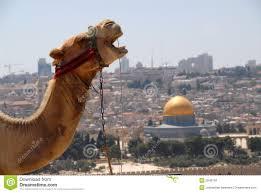 kamelhuvud